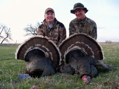 Nebraska Merriam Turkey image 51