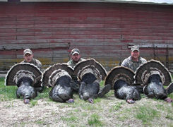 Nebraska Merriam Turkey image 55