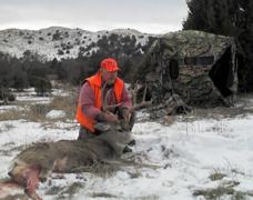 Nebraska Mule Deer 30
