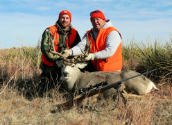 Nebraska Mule Deer 31